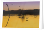 Bosque, Evening by Dee Smart
