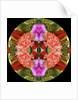 Kaleidoscope_2 by Linda Mann