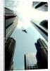 Bird & city by Gary Waters