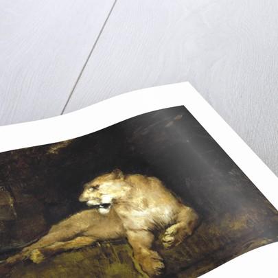 A Lioness by John MacAllan Swan