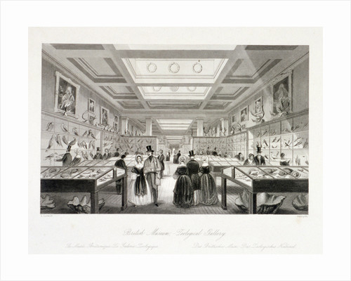 The Zoological Gallery, British Museum, Holborn, London by Robert Sands
