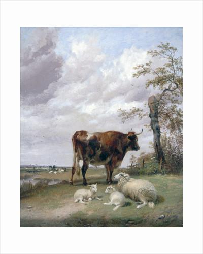 Canterbury Meadows by Corbis