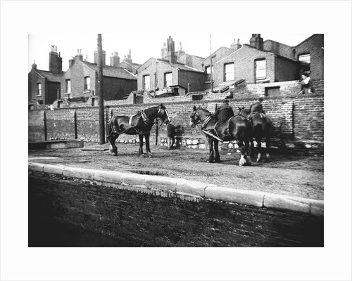 Horses used for towing resting by the side of a canal, London by Bill Brunell