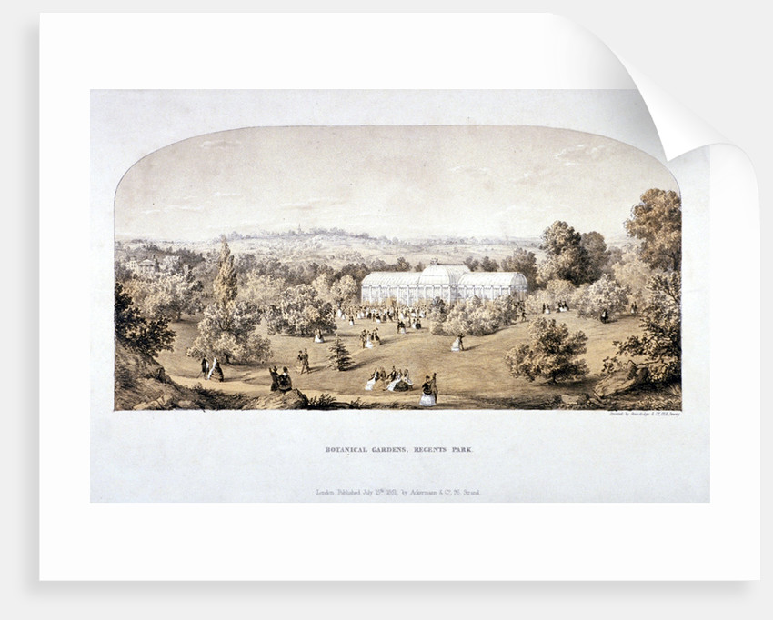 View of the Botanical Gardens in Regents Park, Marylebone, London by Anonymous