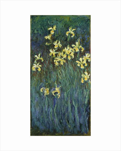 Yellow Irises, 1914-1917 by Claude Monet