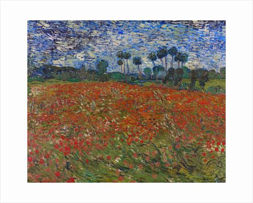 Poppy field by Vincent Van Gogh