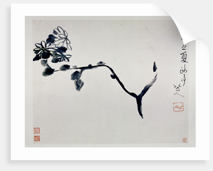 Chrysanthemum, 1692 by Zhu Da