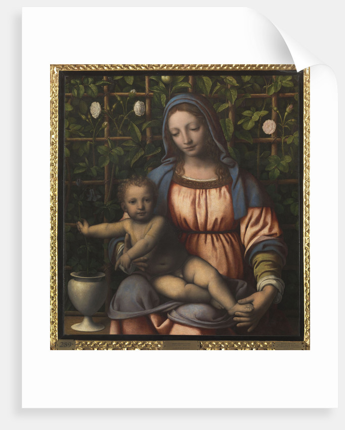The Madonna of the Rose Garden (Madonna del Roseto) by Anonymous