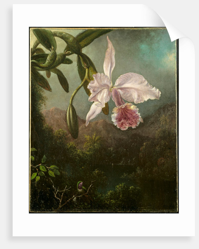 Orchid Blossoms, 1873 by Martin Johnson Heade