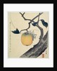 Moon, Persimmon and Grasshopper by HOKUSAI