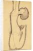 Anna Akhmatova as Acrobat by Amedeo Modigliani