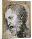 Head of An Apostle (Study for Transfiguration) by Raphael