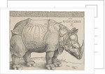 The Rhinoceros by Anonymous