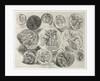 Feuille de douze médailles antiques, 1825 by Eugène Delacroix