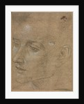 Head of a Young Man, second half 1400s by Filippino Lippi