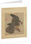 Album of Hawks and Calligraphy, 17th-18th century by Kanô Yôboku Tsunenobu