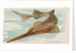 Sawfish, from the Fish from American Waters series for Allen & Ginter Cigarettes Brands, 1889 by Allen & Ginter