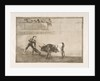 Plate 30 of the 'Tauromaquia': Pedro Romero killing the halted bull., 1816 by Francisco Goya