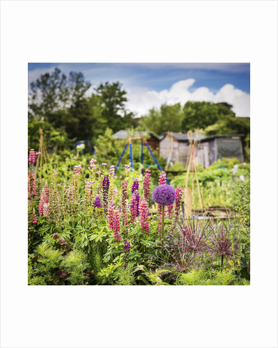 Golden Hill Community Garden by Andy Maybury