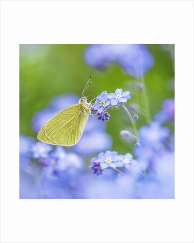 Butterfly Heaven by Sarah-fiona Helme