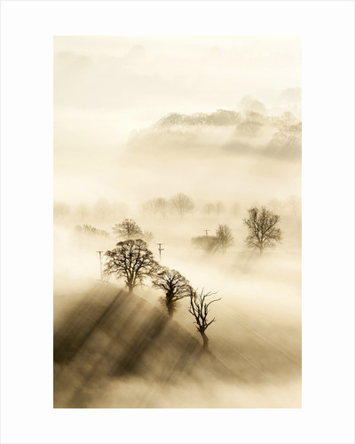 Winter Shadows by Stephen Davis