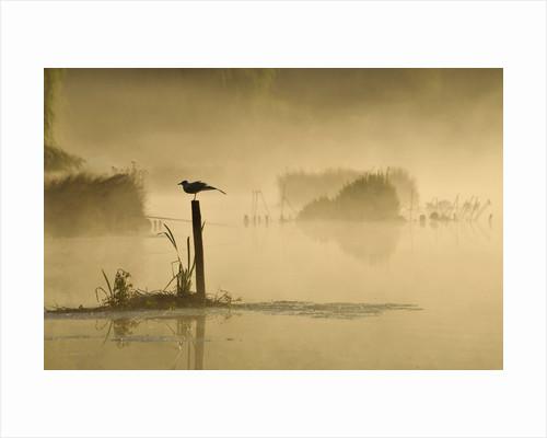 Misty Dawn by Kasia Nowak