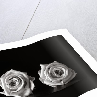 Roses II by Kelly Hoppen