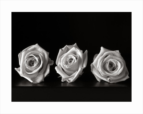 Roses III by Kelly Hoppen
