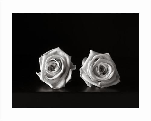 Roses II by Kelly Hoppen