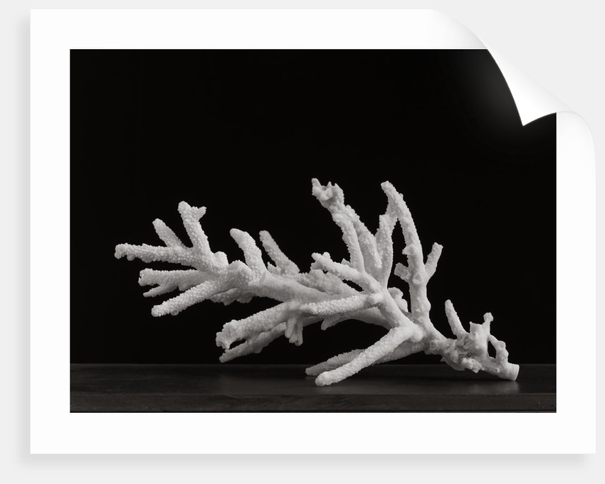 Coral I by Kelly Hoppen