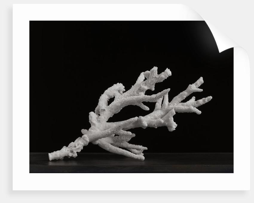 Coral II by Kelly Hoppen