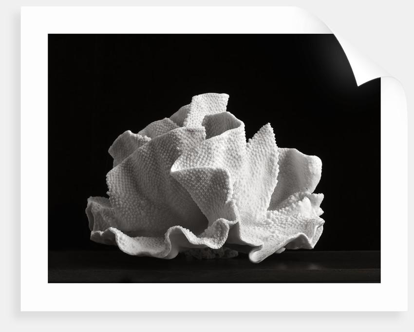 Coral VI by Kelly Hoppen
