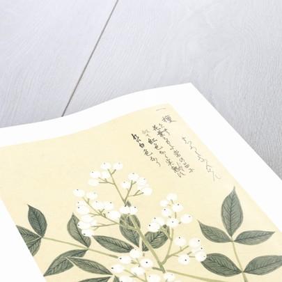 Honzo Zufu [White Berries] by Kan'en Iwasaki