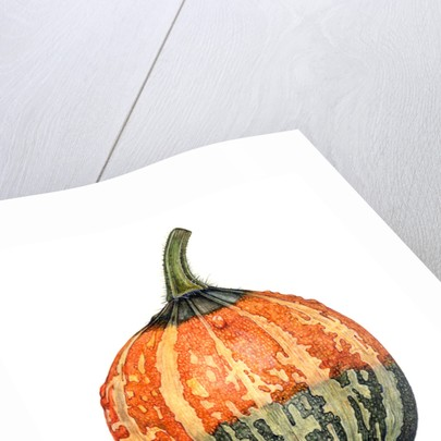Small Gourd by Rachel Pedder-Smith