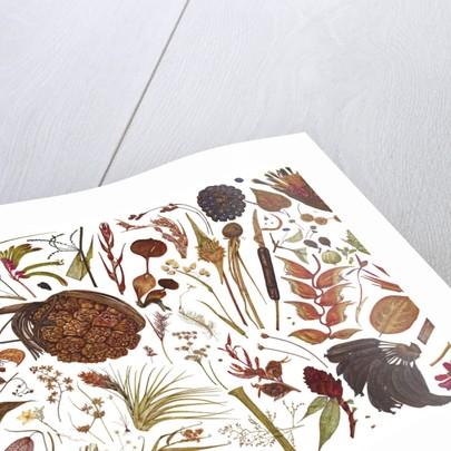 Herbarium Specimen Painting page 2 by Rachel Pedder-Smith