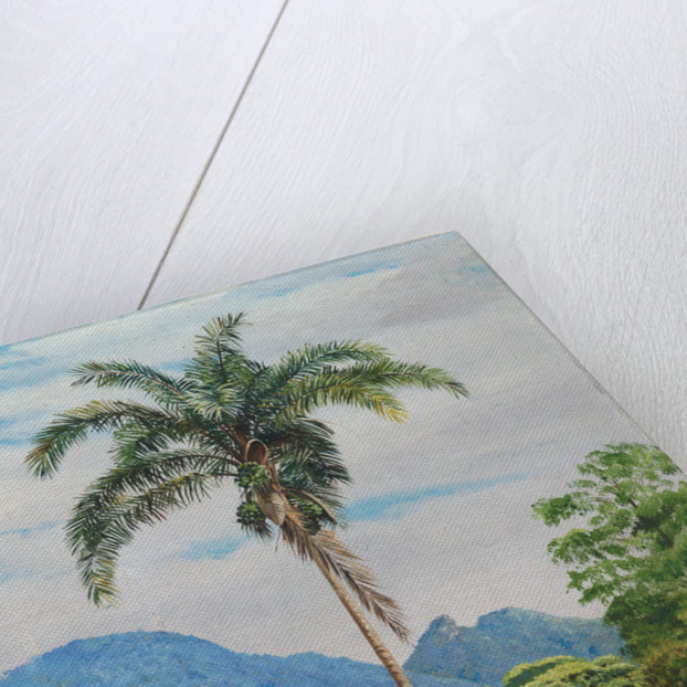 43. Tijuca, Brazil, with a palm in the foreground, 1880 by Marianne North