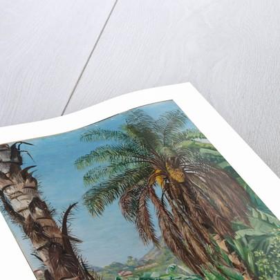 80. Cocoera palms and bananas, Morro Velho, Brazil, 1880 by Marianne North