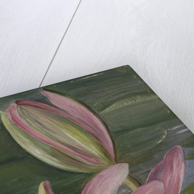 455. Red Water-Lily. by Marianne North
