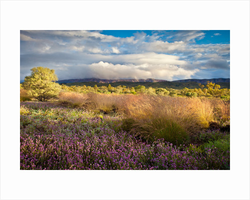 Wildlfowers and Desert Oak by Claire Takacs