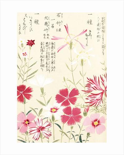 Honzo Zufu [Pinks] by Kan'en Iwasaki