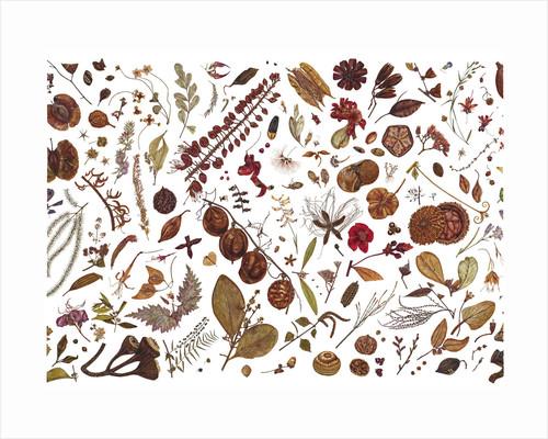 Herbarium Specimen Painting page 4 by Rachel Pedder-Smith