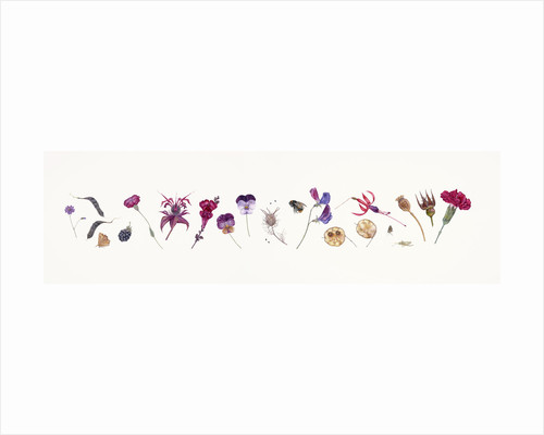 Magenta Flower line by Rachel Pedder-Smith