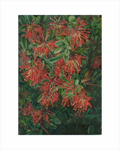 3. Burning bush and emu wren of Chili, 1885 by Marianne North