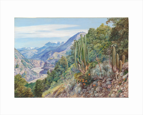 10. The baths of Cauquenas in the cordilleras south of Santiago, Chili, 1880 by Marianne North