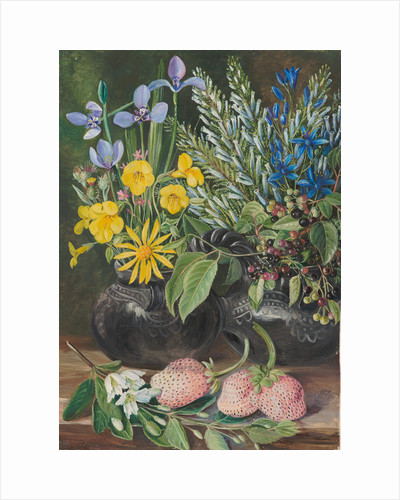 18. Chilean flowers in twin mate pot, and Chili, and strawberries, 1880 by Marianne North