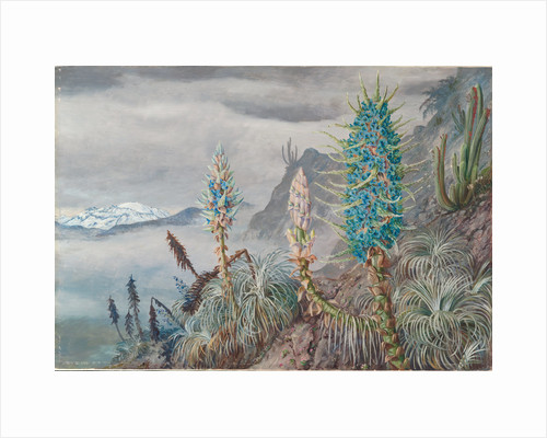 26. The blue puya and cactus at home in the cordilleras, near Apoquindo, Chili, 1880 by Marianne North