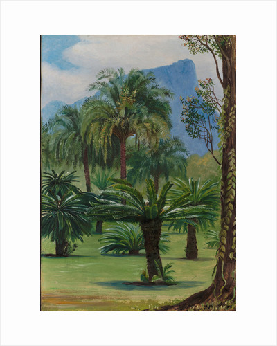 28. Group of sago-yielding cycads in the botanic garden at Rio Janeiro, 1880 by Marianne North