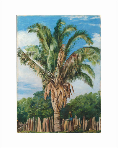41. Indian palm at Sette, Lagoa, Brazil, 1880 by Marianne North