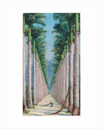 63. Avenue of royal palms at Botafogo, Brazil, 1880 by Marianne North