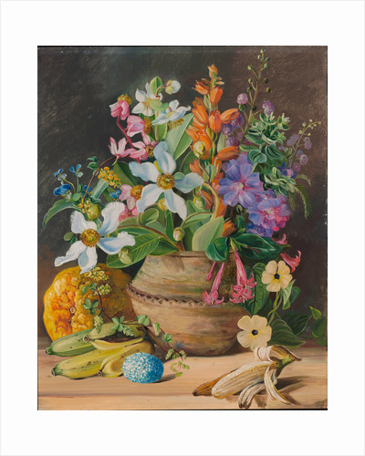 76. Group of wild meadow flowers, of Brazil. Golden Banana and Euemba's (Crotophaga major) Egg, 1880 by Marianne North